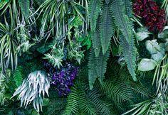 人工グリーンの壁は撮影のアクセントとしてもオススメです。 Cool Rooms, Plant Leaves, Studio, Plants, Studios, Plant, Planets