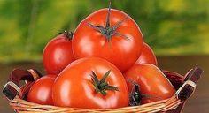 КАК ЗАСТАВИТЬ ТОМАТЫ КРАСНЕТЬ.  Задача по ускорению покраснения томатов поставлена многими огородниками из-за прохладных ночей, из-за туманов и из-за утренних рос! Итак, рассмотрим несколько способов ускорения созревания томатов!!! 1.Два дня подряд нужно полить наши кусты розовым раствором марганцовки и через недельку они начнут массово краснеть ! 2.Так -же, результаты дает опрыскивание помидорных кустов раствором йода.На 10 литровое ведро с теплой водой взять 30-35 капель аптечной настойки…