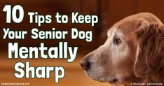 In older pets, it's especially important to review weight, muscle tone, joint…
