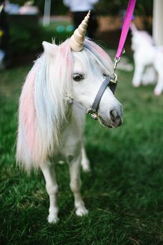 A Unicorn Petting Station Made This Couple's Wedding Reception Unforgettable - Danny Gardner - - A Unicorn Petting Station Made This Couple's Wedding Reception Unforgettable Photo credit: Jessica Maida Photography Unicorn Fantasy, Real Unicorn, Unicorn Horse, Baby Unicorn, Unicorn Art, Cute Unicorn, Rainbow Unicorn, Unicorn Birthday, Unicorn Wedding