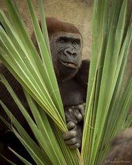 Primates - Francisco Herrera