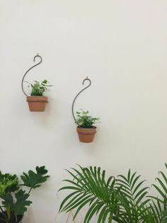 Mr Kitly Curved Wall Plant Hanger