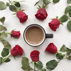 Friday!! Yippee!! Struggling with today's prompt (unrestrained) so am going with this pic to celebrate my unrestrained consumption of coffee and these unrestrained roses!  #13_unrestrained #365_today