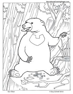 bear coloring, animal coloring