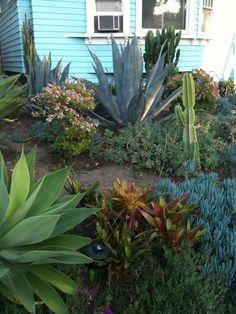 Another cool #garden. Read great articles on gardening here http://articles.builderscrack.co.nz/category/gardening/ or hire a gardener or #landscape #architect  today from #Builderscrack http://builderscrack.co.nz/post-job-desc