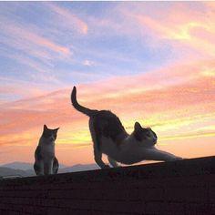 land-like-a-cat:  via@bd_cats Instagram photos   Websta