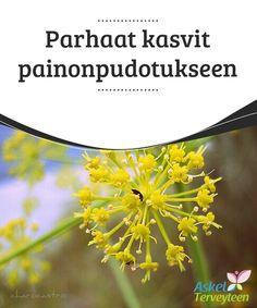 Parhaat kasvit painonpudotukseen   Tässä artikkelissa #puhumme tietyistä #kasveista, jotka auttavat #painonpudotuksessa.  #Laihduttaminen
