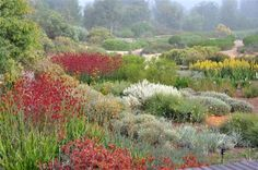 Excellent display of a rich planting scheme; credit: Paul Thompson