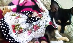 #harnessdress #miascloset #dogcollar https://www.etsy.com/shop/miascloset?section_id=5429945&ref=shopsection_leftnav_6