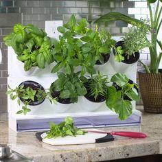 Adaline 3 ft x 3 ft Western Red Cedar Vertical Garden Hydroponic Gardening, Hydroponics, Container Gardening, Aquaponics Greenhouse, Indoor Gardening, Organic Gardening, Greenhouse Ideas, Gardening Tips, Indoor Planters