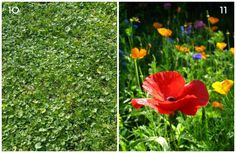 11 Grass-Free Yards