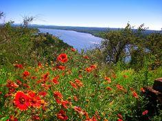 Indian Blanket wildflowers overlooking the Colorado River near Llano, Texas.  #txwildflowers