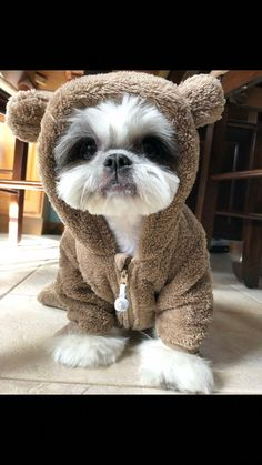 Best dogs and puppies shih tzu baby Ideas Really Cute Puppies, Cute Dogs And Puppies, Baby Dogs, Doggies, Cutest Dogs, Perro Shih Tzu, Shih Tzu Puppy, Shih Tzus, Cute Funny Animals