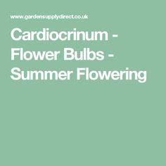 Cardiocrinum - Flower Bulbs - Summer Flowering