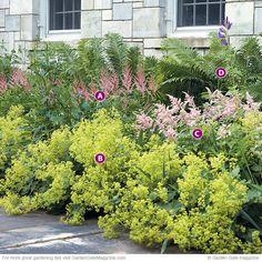 Lady's mantle (Alchemilla mollis), Astilbe 'Cattleya' (a), Astilbe 'Peach Blossom' (c), and ostrich fern (Matteuccia struthiopteris); copyright Garden Gate Magazine