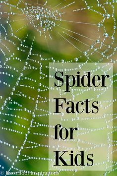 Here are 20 fun spider facts for kids! They are perfect for small groups, circle time, or one on one. Spiders are helpful creatures, and the more we know about them, the less we will be afraid. Preschool Science, Science For Kids, Science Activities, Activities For Kids, Spider Art Preschool, Insect Activities, Preschool Halloween, Halloween Activities, Camping Activities