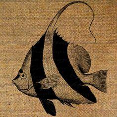 Beautiful Ocean Angel Fish Digital Image Download by Graphique, $1.00