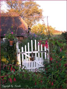 in our friends cottage garden. It's the entrance in the kitchen garden/potager.