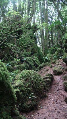 Puzzlewood, Forest of Dean, UK  Eddie Procter