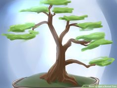 How to Start a Bonsai Tree (with Pictures) - wikiHow