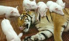 Você irá surpreender-se com os laços de amizade entre estes animais!
