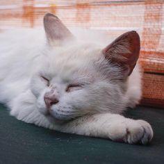 #cat #straycat #ねこ #猫 #のらねこ #野良猫 #猫写真 #neko #kittie #catstagram #catsofinstagram #instacat #nekoclub