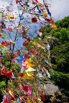 Tanabata is the Star Festibal celebrated on 7th July in Japan.