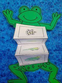 frog life cycle activity - Out of the Ark music, primary school songs, school musical, preschool songs, teachers, classroom resources, school songs, primary school musicals, Croak!