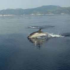 Holiday Destinations, Whale, Greece, Animals, Greece Country, Animales, Animaux, Places To Travel, Whales