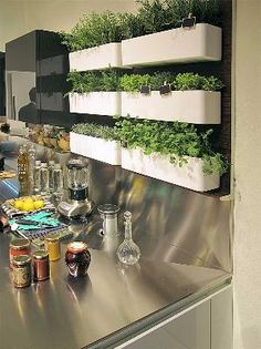 Herbs on wall in kitchen