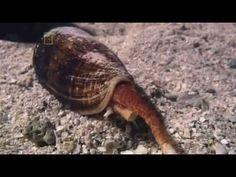 ▶ National Geographic Channel - World's Deadliest Animals: Australia (Documentary) - YouTube