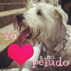 Amor incondicional Www.instagram.com/bastetpets  #BastetPets #AmorPeludo #AdopciónResponsable #catsbogota #catLovers #instapet #Schnauzer