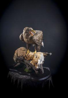 Taxidermy Bird Taxidermy, Deer Mounts, Animal Sculptures, Art Studios, Eagles, Bald Eagle, Wildlife, Statues, Animales