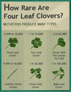 Leaf Quotes, Sign Quotes, Clover Tattoos, Irish Eyes Are Smiling, Irish Quotes, Irish American, St Patrick's Day Crafts, House Plants Decor, Saint Patrick