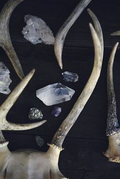 Items similar to Stag and Stone - Antlers - Antler Photograph - Crystal - Quartz - Gem - Deer - Fine Art Photograph - Nature Photography - Autumn - Horns on Etsy Crystals Minerals, Rocks And Minerals, Crystals And Gemstones, Stones And Crystals, Crystal Magic, Crystal Healing, Monochrom, Healing Stones, Magick