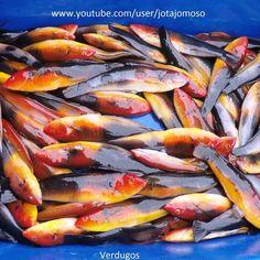 Love fishing videos? Click here.  #bassfishing  #fisheries  #fishingshop  #fishingtackleshop  #fishinghook  #lure  #reel  #fishingstore  #go fishing  #walleyefishing  #huntingandfishing  #bait  #tackle  #angler  #saltwater  #baitandtackle  #fising  #carpfish  #shimanofishing  #deepseafishing  #jig  #fishingknots  #livebait