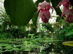 san francisco flower conservatory images | ... sol - Picture of Conservatory of Flowers, San Francisco - TripAdvisor