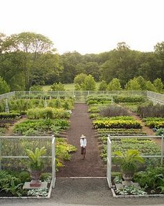 vegetable garden... wow