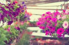 Flower gardens · Sheepy Me