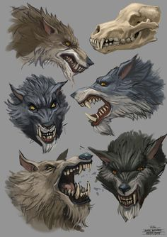 Wolfstudy 15 01 15 by Andy-Butnariu on DeviantArt
