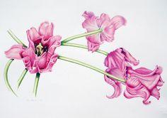 Sue Hénon – The Society of Botanical Artists