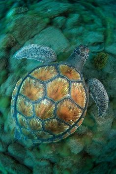 Beautful Sea Turtle