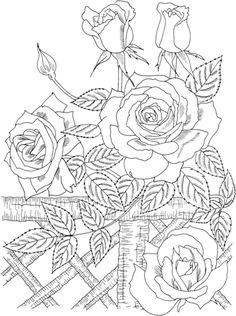 "Rosal Trepador ""América"" Dibujo para colorear. Categorías: Rosas. Páginas para…"