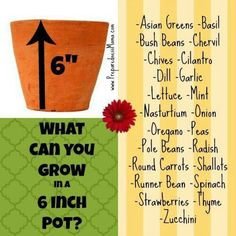 What can you grow in a 6-in pot