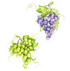 #grapes by Amy Holliday