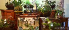 Planting List of Beautiful Vivarium, Terrarium, and Bottle Garden Plants! - Pumpkin Beth