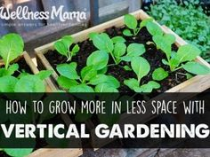 How to grow more in less space with vertical gardening