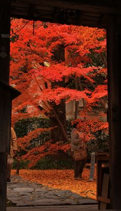 Regenji temple in Sakyo-ku, Kyoto! This is the entrance gate with a peek into the garden.