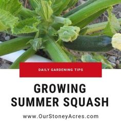 Sprinkler Vs Drip Irrigation for Your Garden - Our Stoney Acres Fall Vegetables, Growing Vegetables, Ripen Green Tomatoes, Everbearing Strawberries, How To Store Potatoes, Growing Carrots, Row Covers, Drip Irrigation System, Landscaping Jobs
