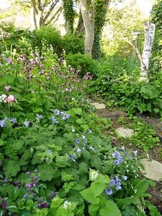 A woodland wildlife garden in the making... courtesy of #RSPB's gardening for wildlife expert Adrian Thomas.